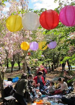 Brogdale Collections: Hanami Experience and Festival